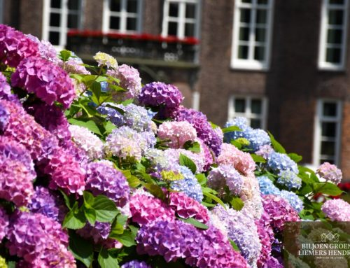 Verzorg uw tuin bij deze temperaturen goed!