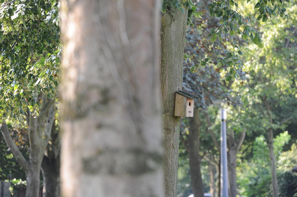 Vogelhuisje park