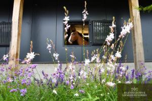Paard beplanting