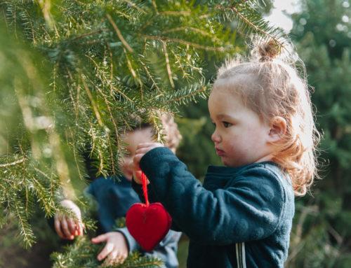 Kerstbomen halve prijs