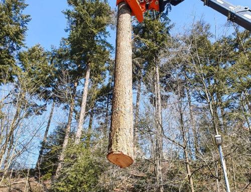 Bomen vellen Rijnstate