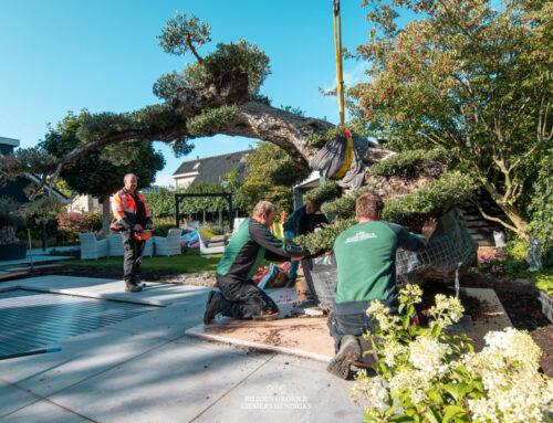 Bonsaiboom plaatsen