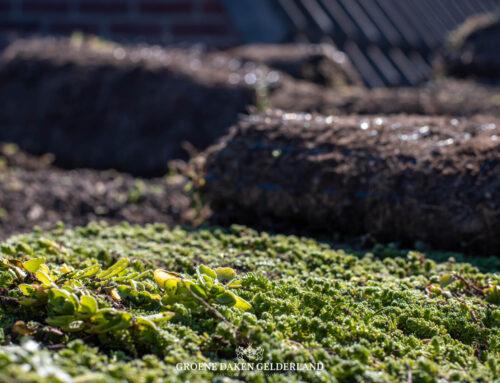Groene Daken Gelderland